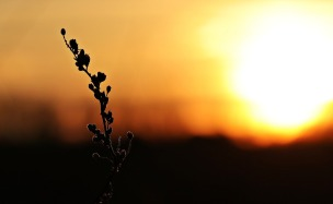 sunset-2021238_1280