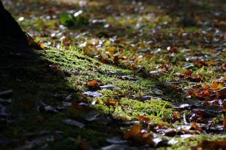autumn-1694387_1280