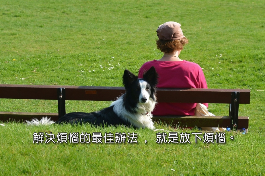 border-collie-1541852_1280-2