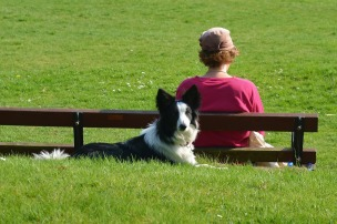 border-collie-1541852_1280