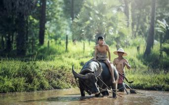 buffalo-1807517_1280