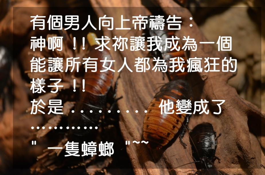 cockroaches-215544_1280-2
