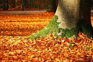 fall-foliage-1913485_1280