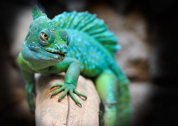 reptile-2042906_1280