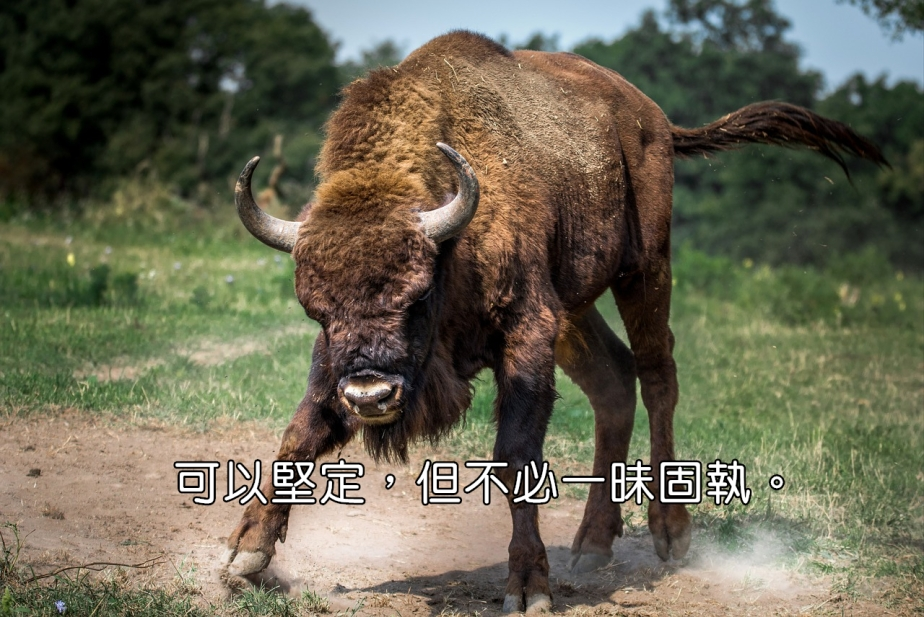 bison-european-2118538_1280-2