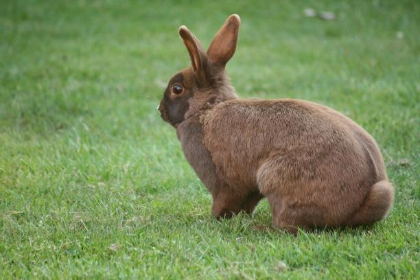bunny-1426995_1280