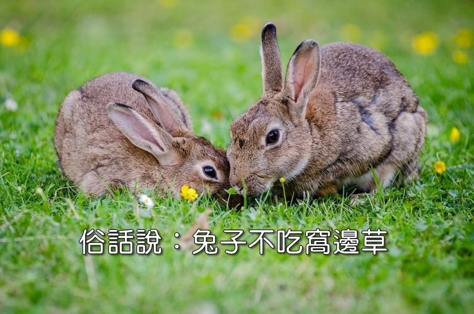 european-rabbits-1006621_1280-2.jpg