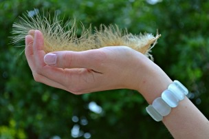feather-1080956_1280