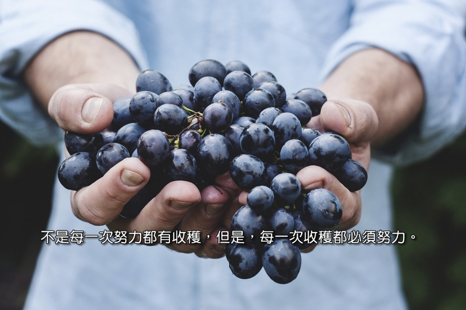 grapes-690230_1280-2