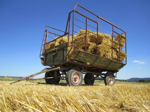 harvest-1938956_1280