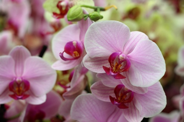orchid-1841880_1280