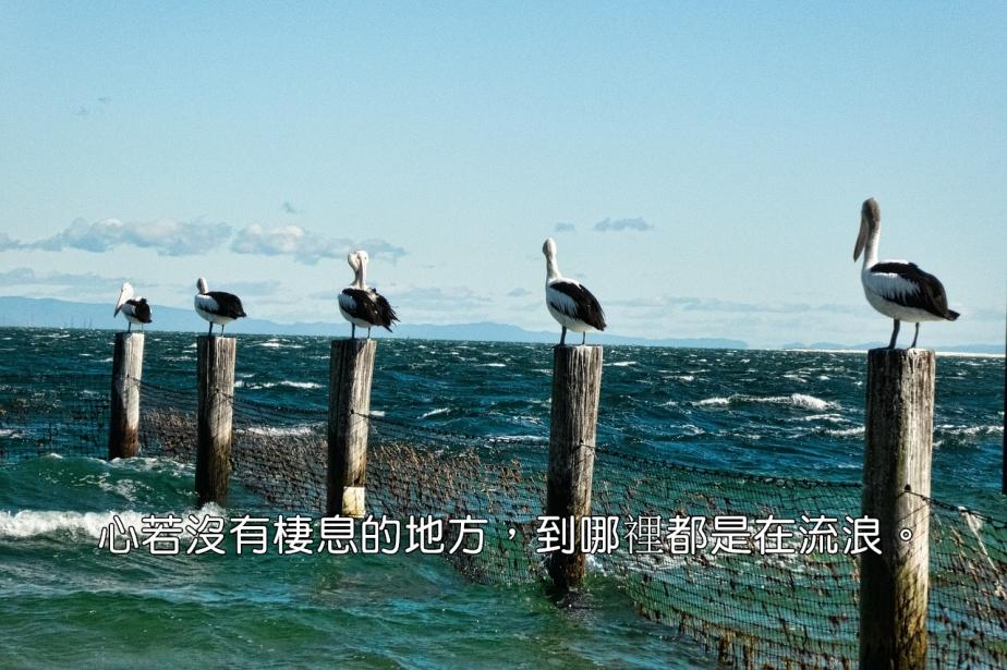 pelicans-861580_1280-2.jpg