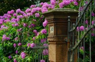 rhododendron-999849_1280