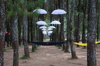 umbrella-2153882_1280