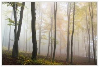 autumn-194834_1280
