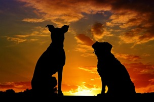 dogs-2222801_1280