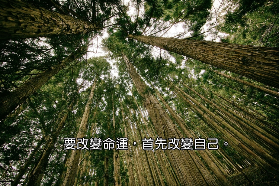 forest-505860_1280-2.jpg