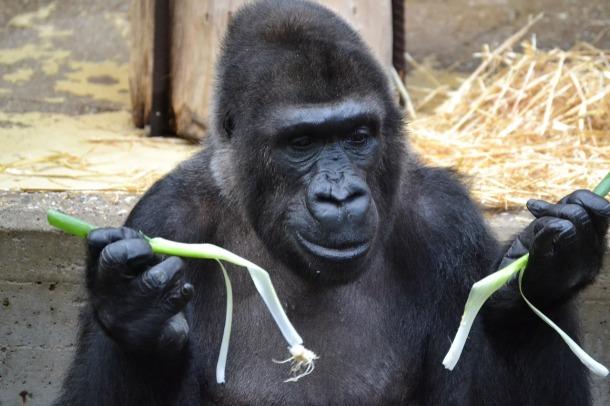 gorilla-1024297_1280