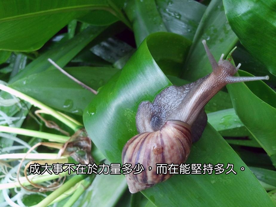 snail-71047_1280-2