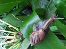 snail-71047_1280