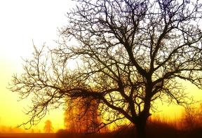 tree-77271_1280