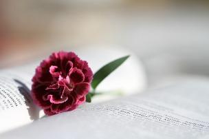 bible-888299_1280