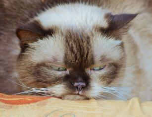 cat-1378203_1280