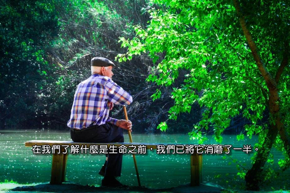 elder-1425733_1280-2