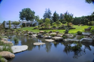 natural-pond-2428106_1280