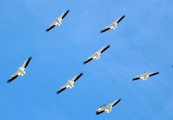 birds-112083_1280