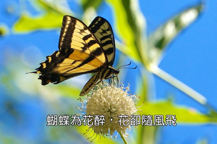 butterfly-2398529_1280-2