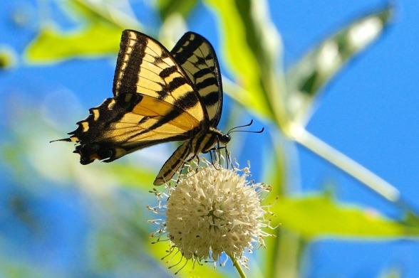 butterfly-2398529_1280