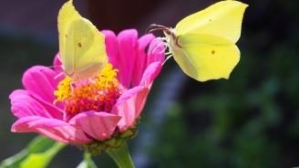 butterfly-2488373_1280