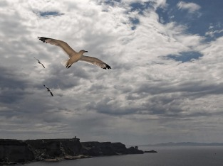 flying-seagull-2060769_1280