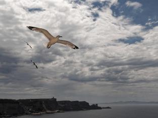 flying-seagull-2060769_1280