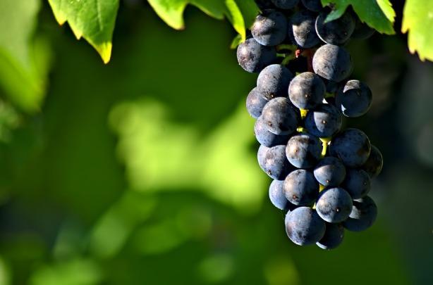 grapes-980902_1280