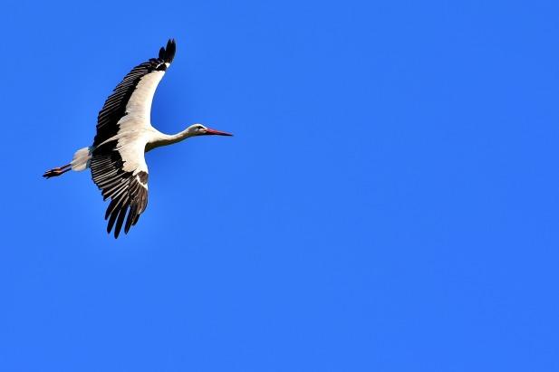 stork-2432978_1280