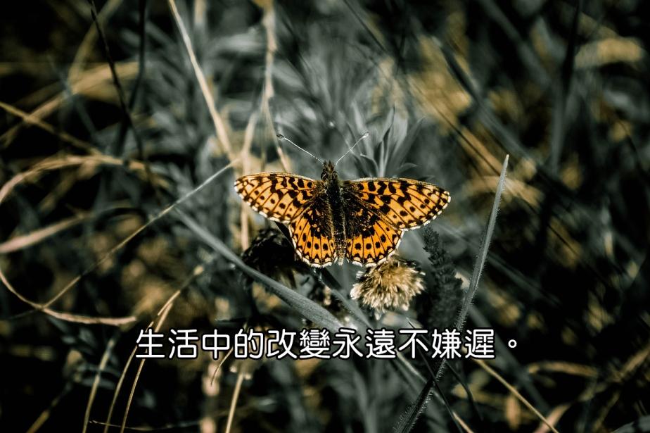butterfly-734654_1280-2