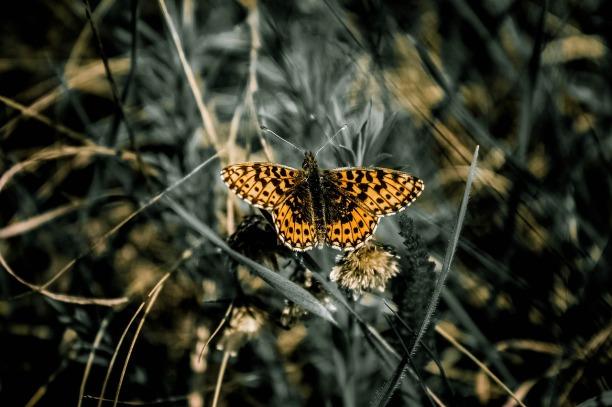 butterfly-734654_1280