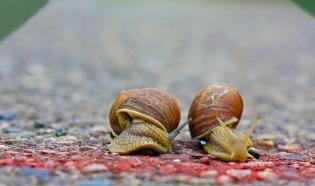 snails-1540696_1280
