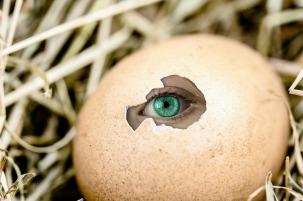 egg-2502948_1280
