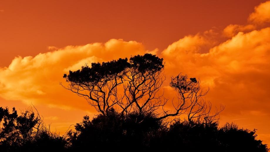 trees-2920264_1280