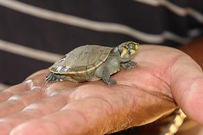 turtle-783713_1280