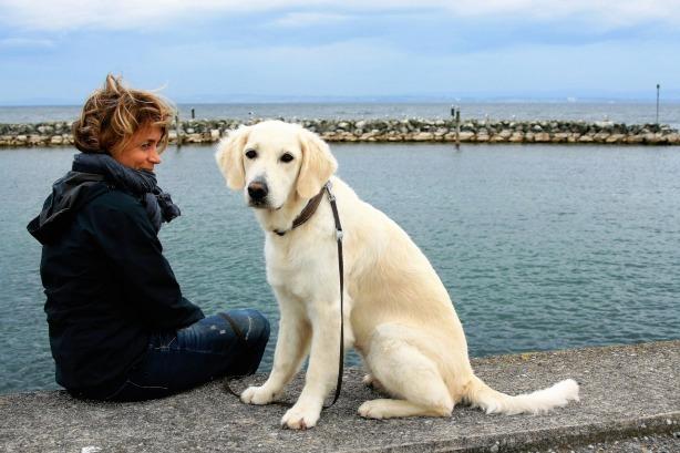 white-dog-2897935_1280