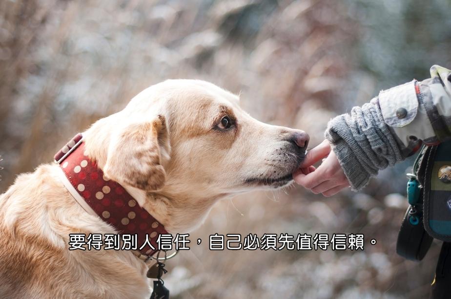 dog-1861839_1280-2