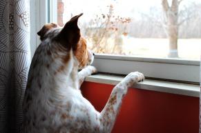 dog-658206_1280