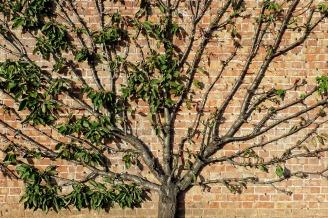 tree-1706648_1280