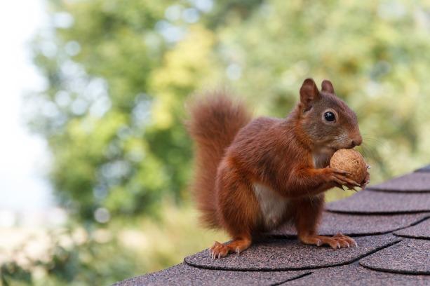 squirrel-2996738_1280