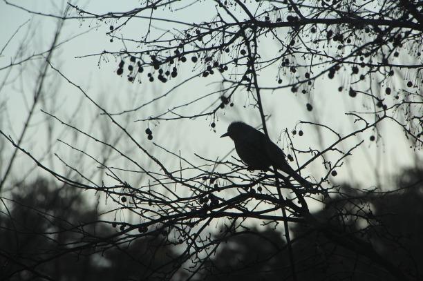 winter-775590_1280
