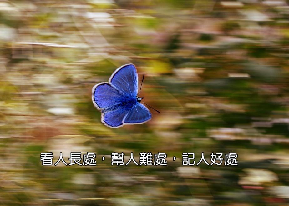 butterfly-2837589_1280-2
